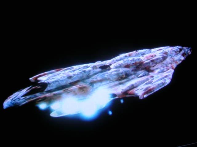 Question Calamari MC 80 Liberty